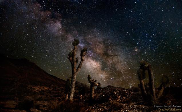 Starry Stare | Rogelio Bernal Andreo