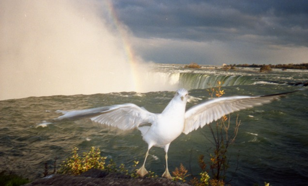 A seagull by a waterfall.