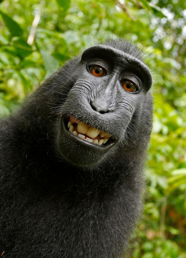 'Selfie Monkey'